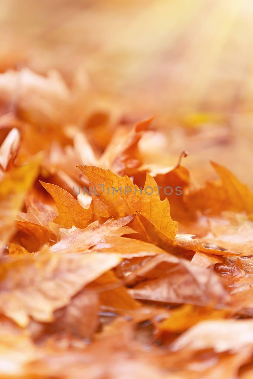 Beautiful autumn background by Anna_Omelchenko