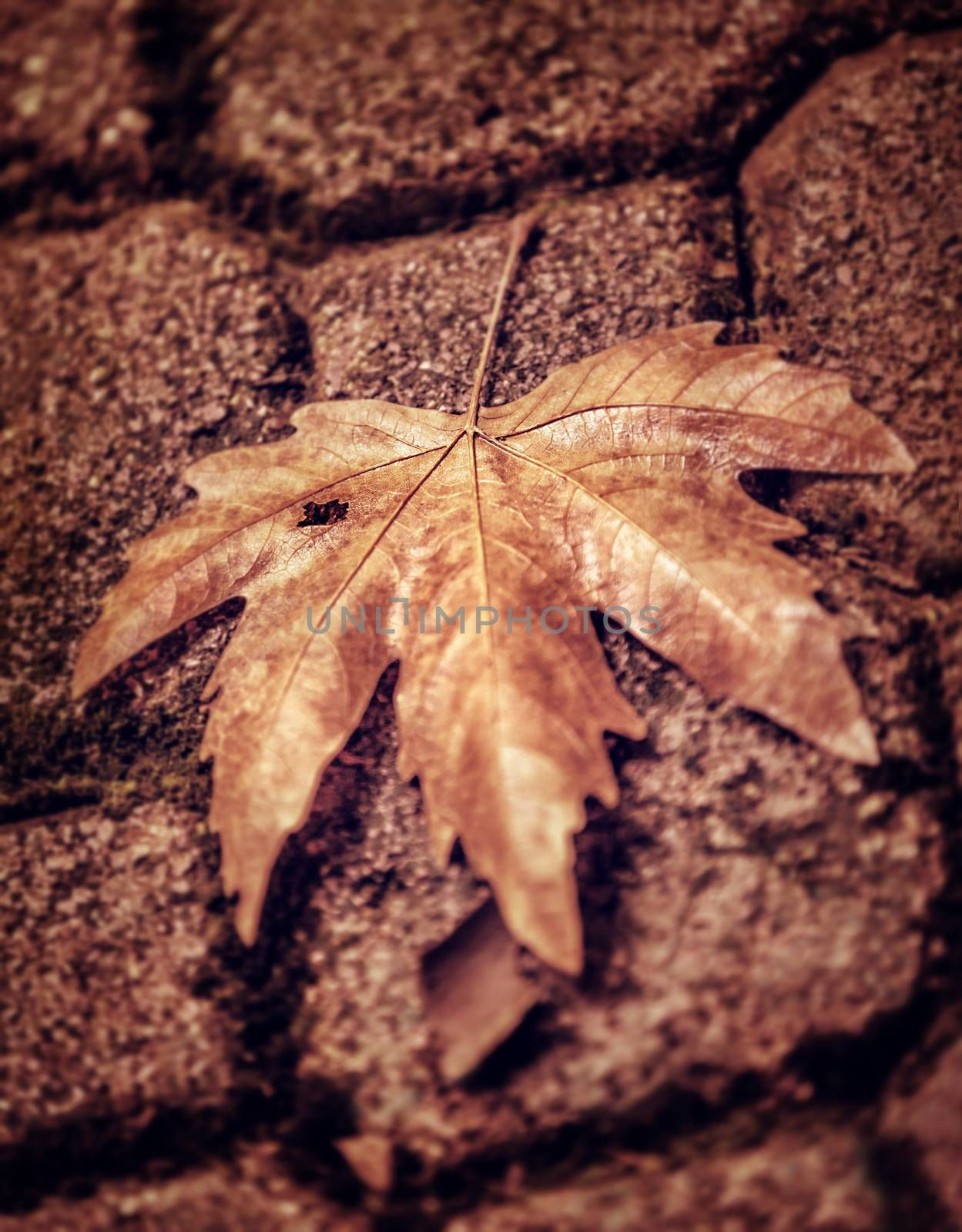 Abstract autumn background, grunge style photo of dry maple leaf on brown brick wall, detail of fall nature, weather change concept