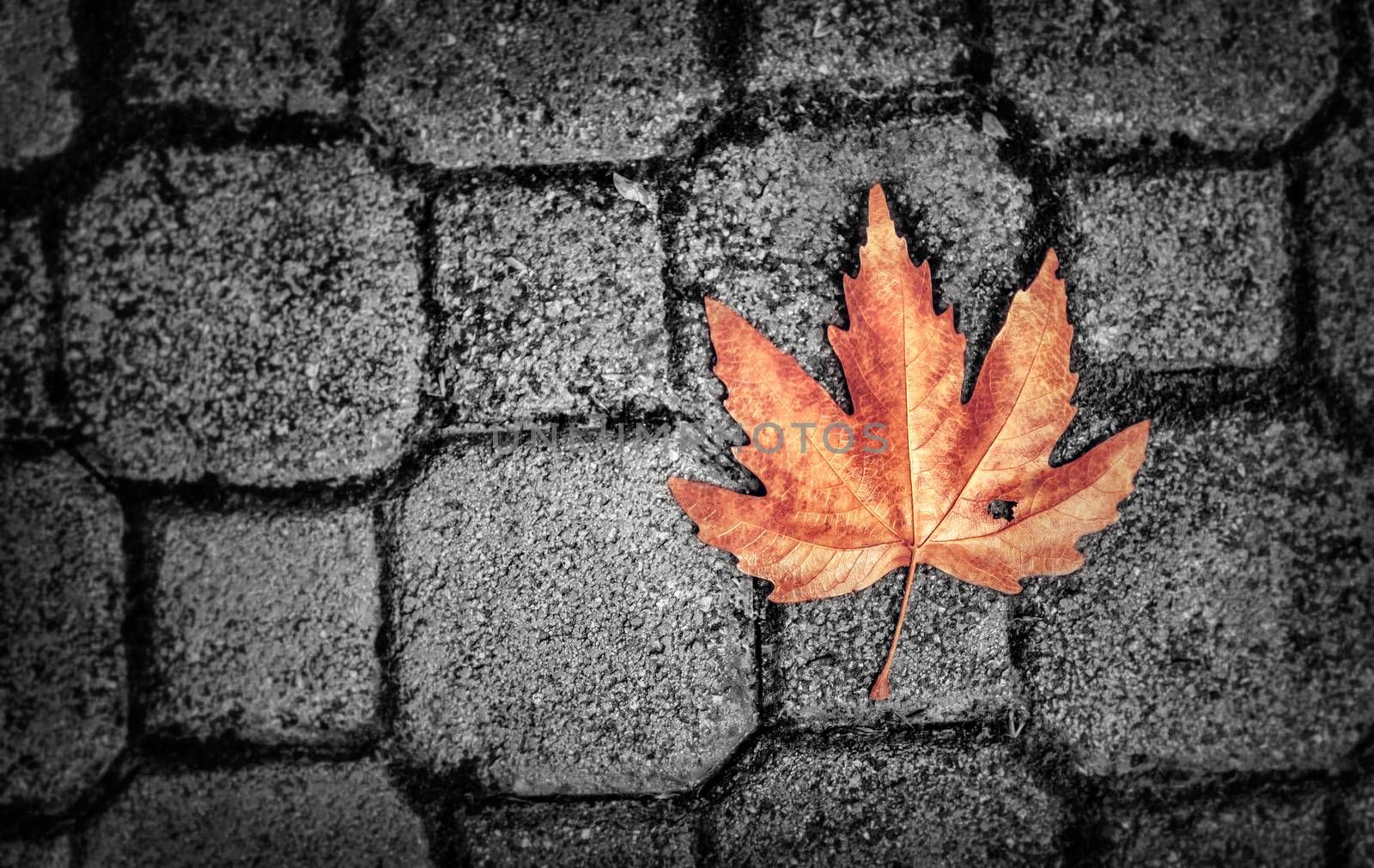 Abstract autumn background, grunge style photo of dry maple leaf on gray brick wall, detail of fall nature, weather change concept