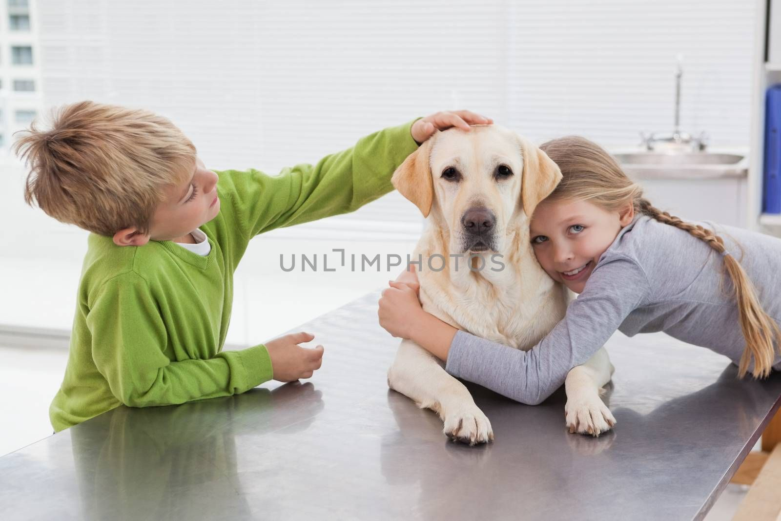 Cute labrador with its owners in medical office