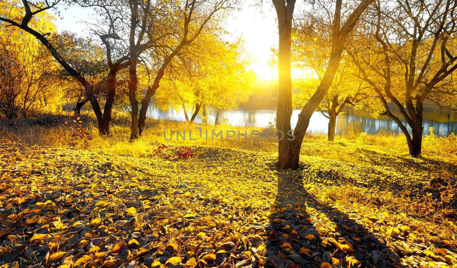 Autumn beauty on river at the sunrise