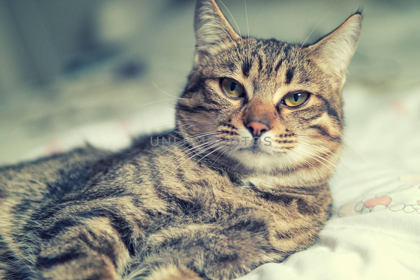 Tabby cat relaxing