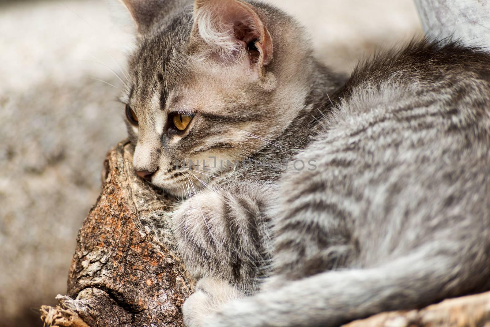 Little tabby cat relaxing