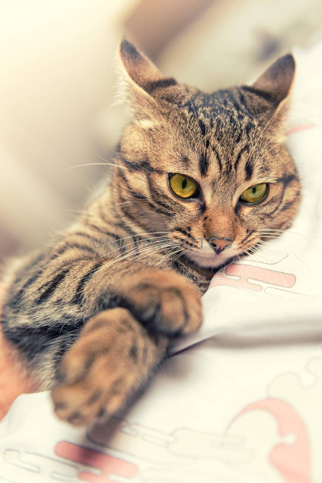 Tabby cat with yellow eyes relaxed on bed