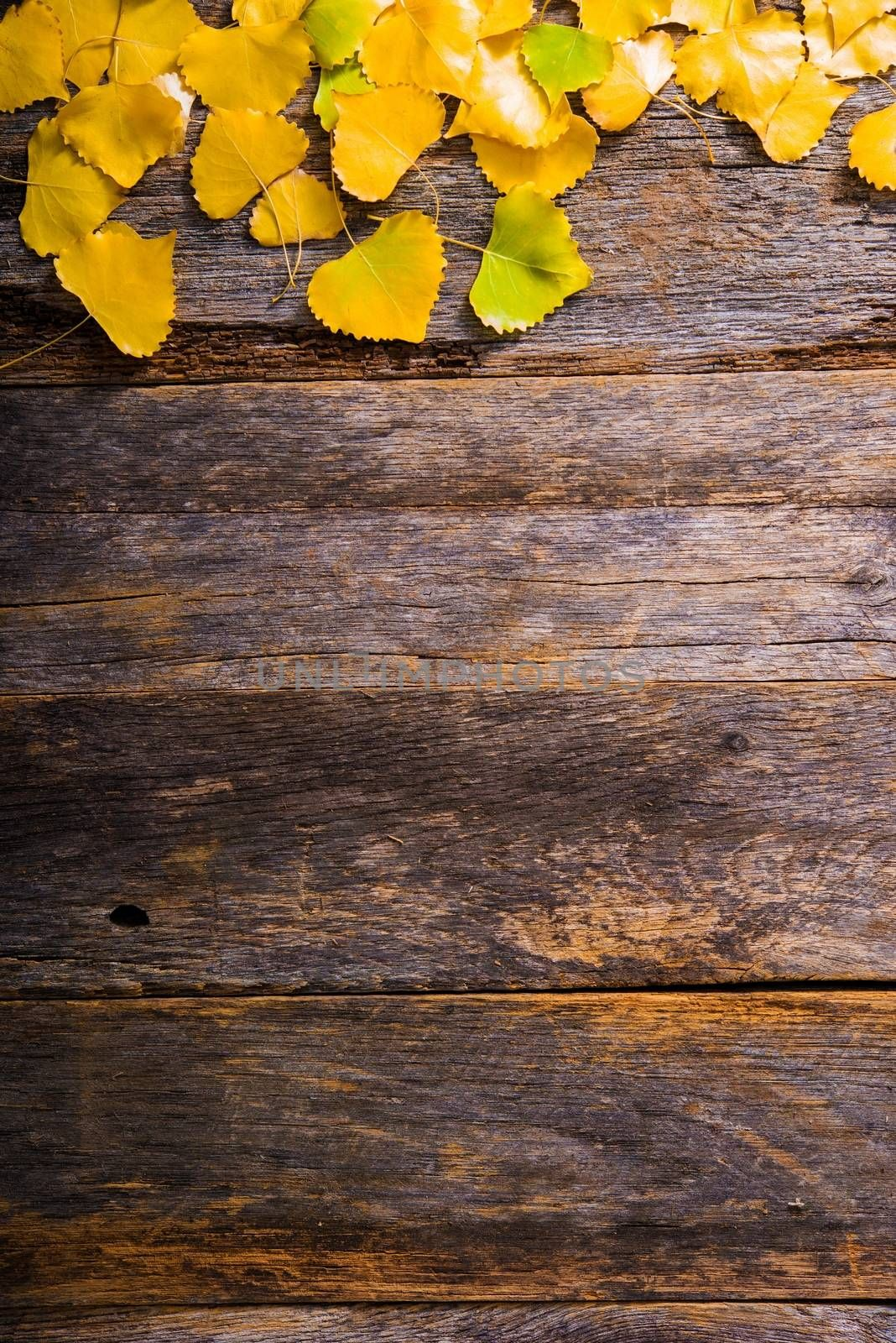 Fall Wooden Background with Yellow Aspen Tree Leaves and Copy Space Below. Aged Wood Planks Autumn Backdrop.