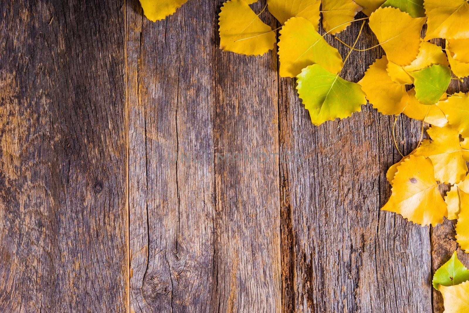 Autumn Fall Background. Aged Reclaimed Wood Planks and Golden Aspen Tree Leaves. Copy Space Area. Fall wooden Backdrop.
