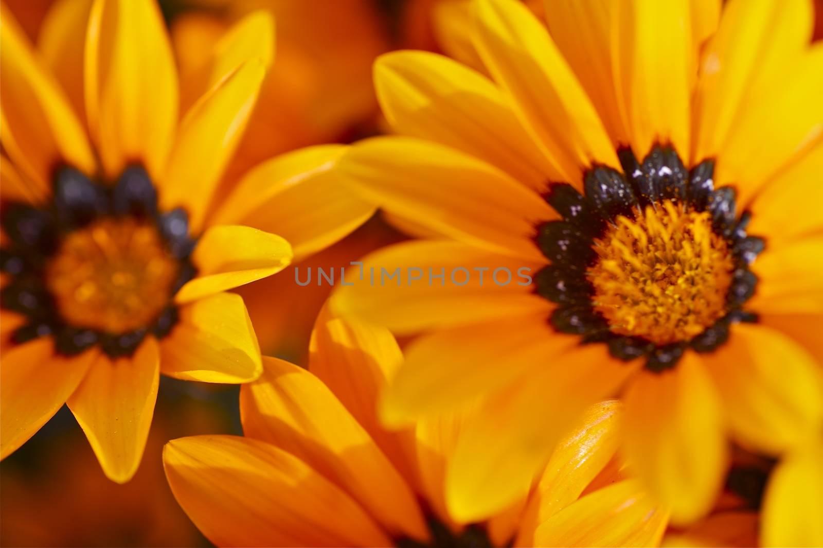 Orange Beauty. Beautiful Small Orange Spring Flowers. Macro Photography. Flower Photo Collection.