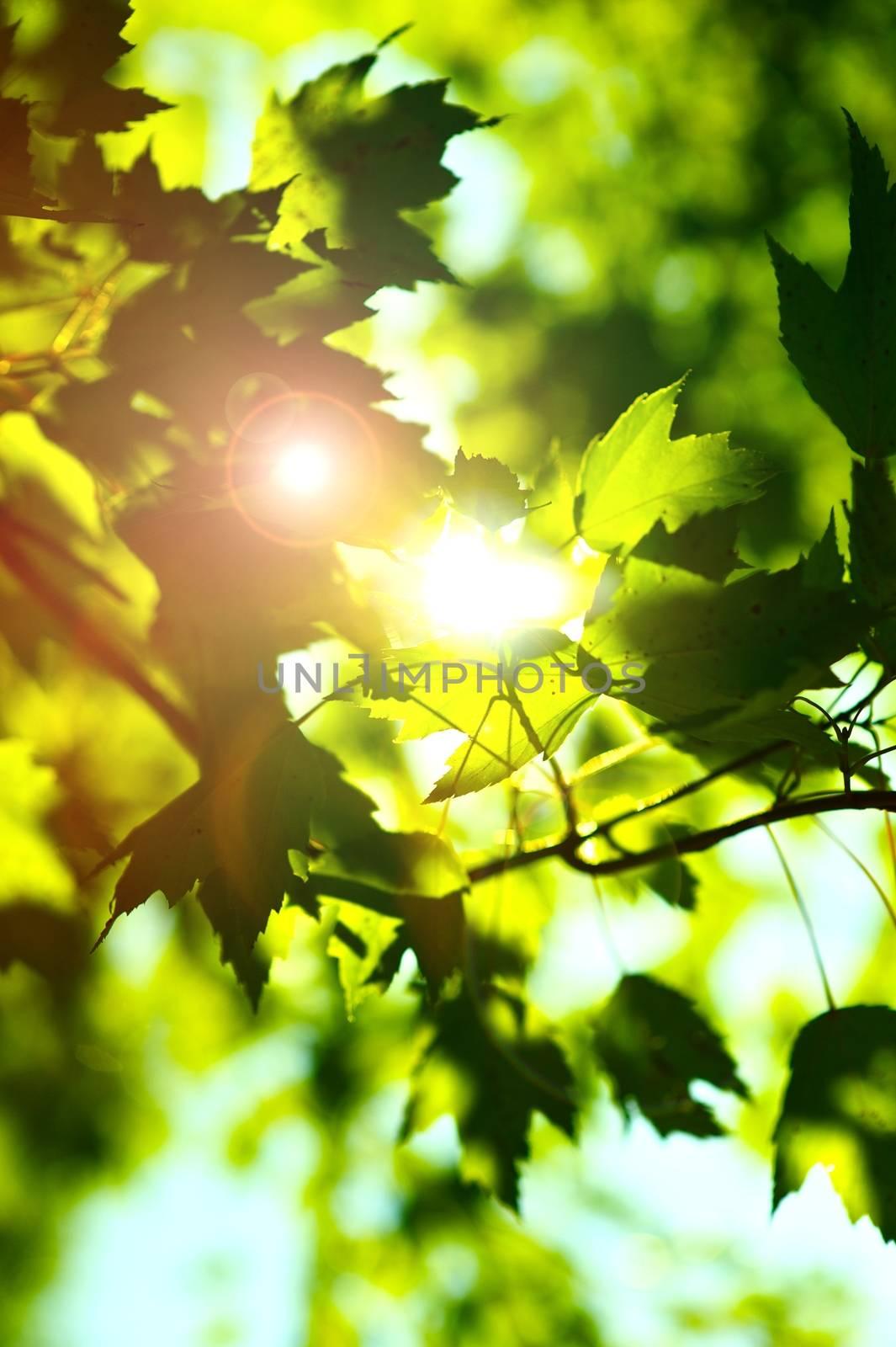 Summer Shine. Sun Rays Between Summer Green Leafes. Vertical Photo Theme.