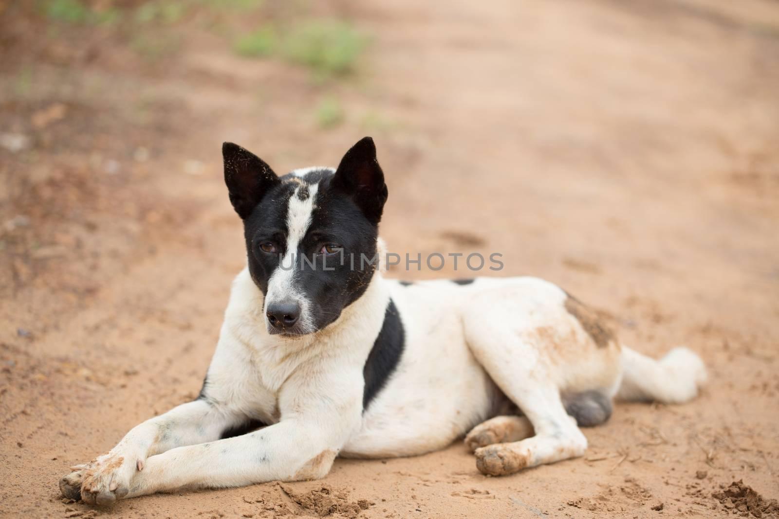 Roadside dog waiting with hope.