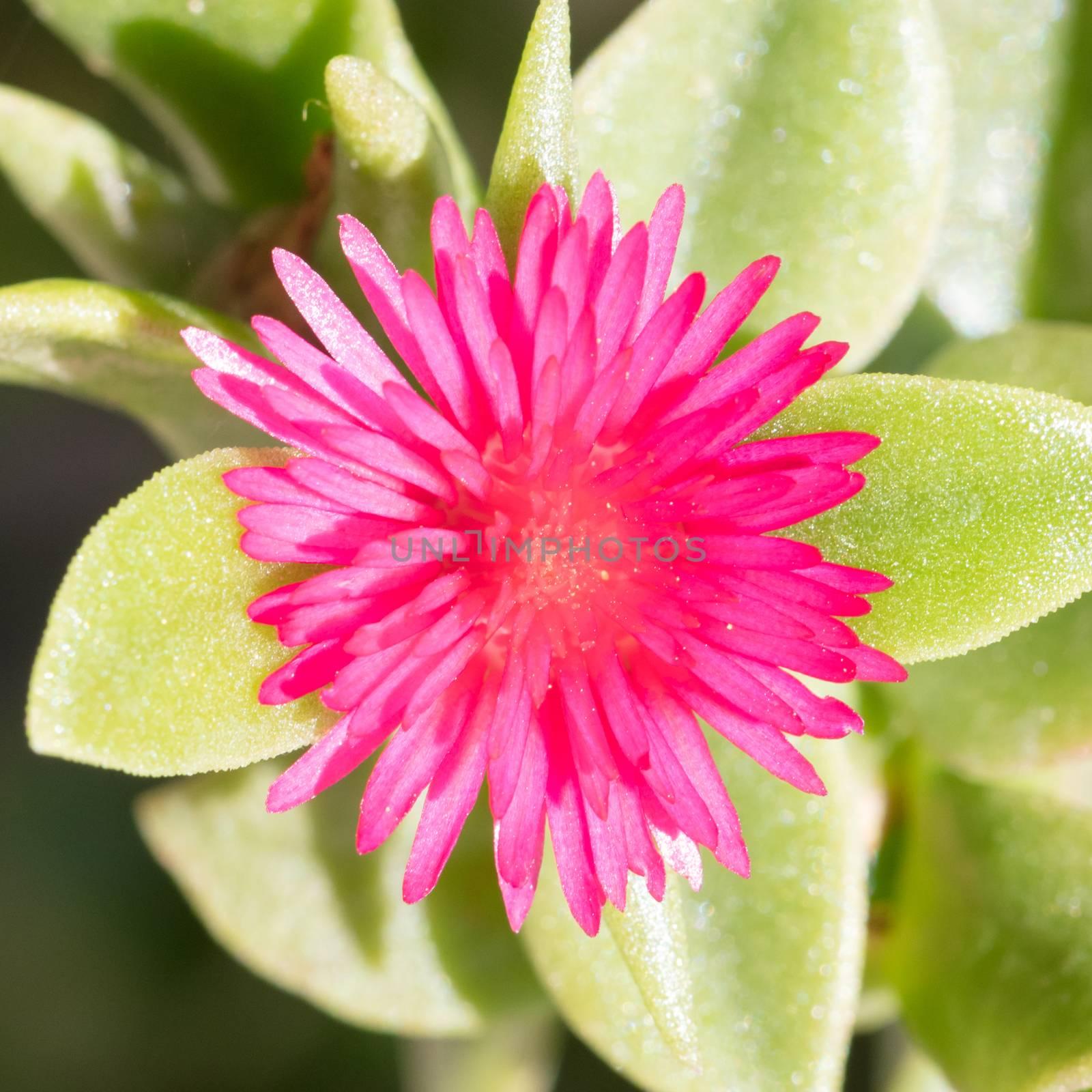 Flower in the summer - Garden in Greece