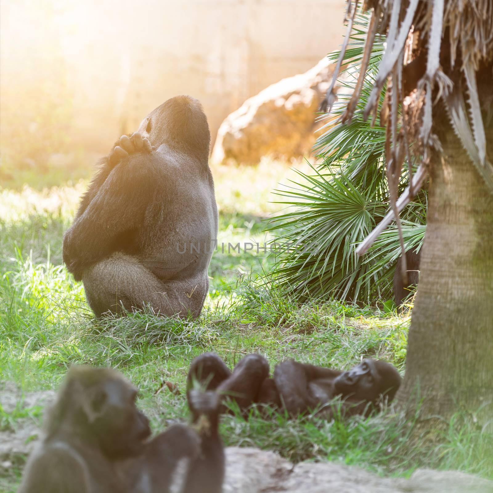wildlife, gorilla animals in the forest