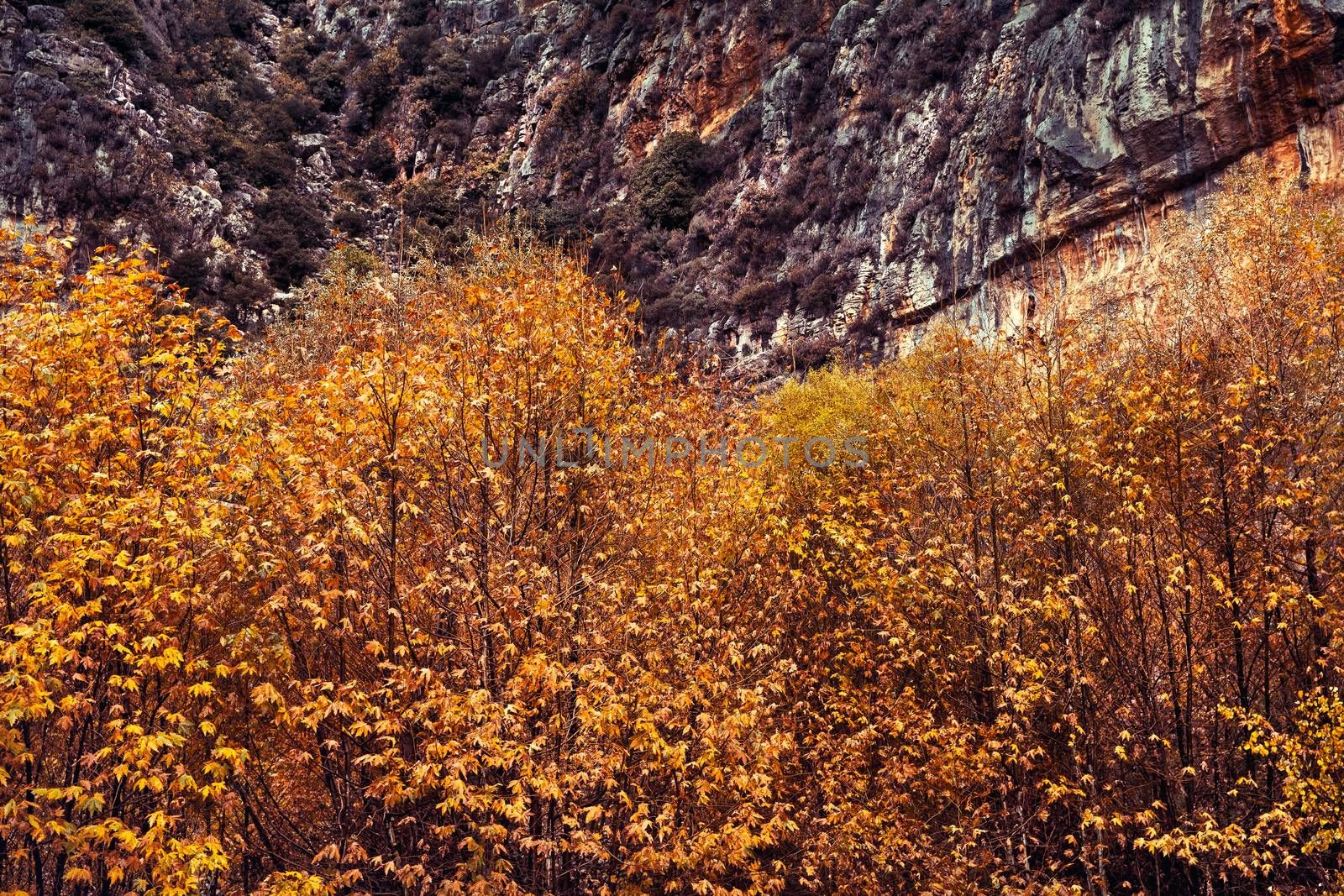 Beauty of autumn, trees with golden foliage under great mountain, abstract natural background, change of a seasons concept
