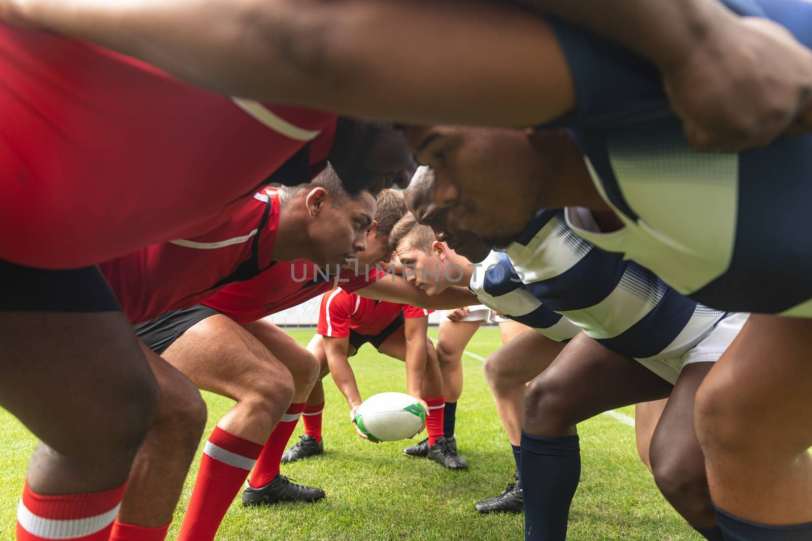 Side view of group of diverse male rugby players ready to play rugby match in stadium. Players are looking into the eyes of the competitors.