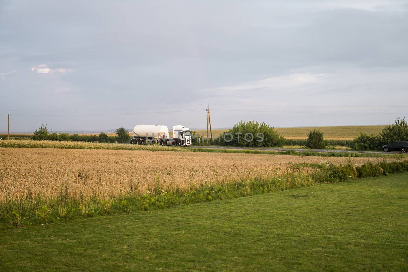 Truck on the road moving through wheat fields. Transportation