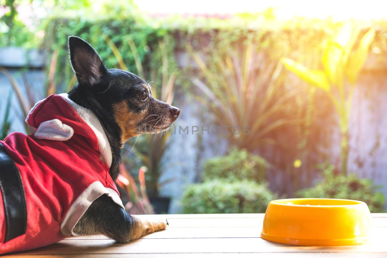 Cute small dog with bowl of dog food. Pets is feeding concept.