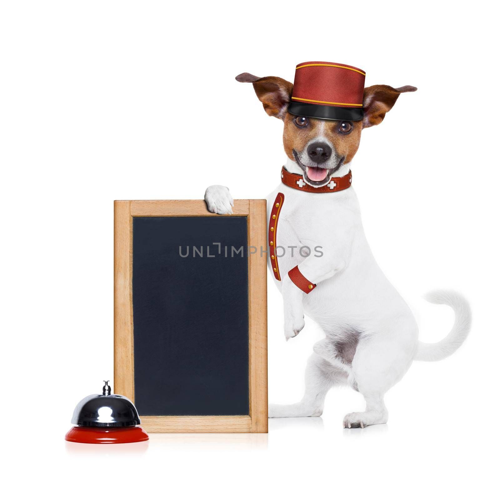 jack russell bellboy dog holding a blank and empty blackboard at hotel, where pets are welcome and allowed,isolated on white background