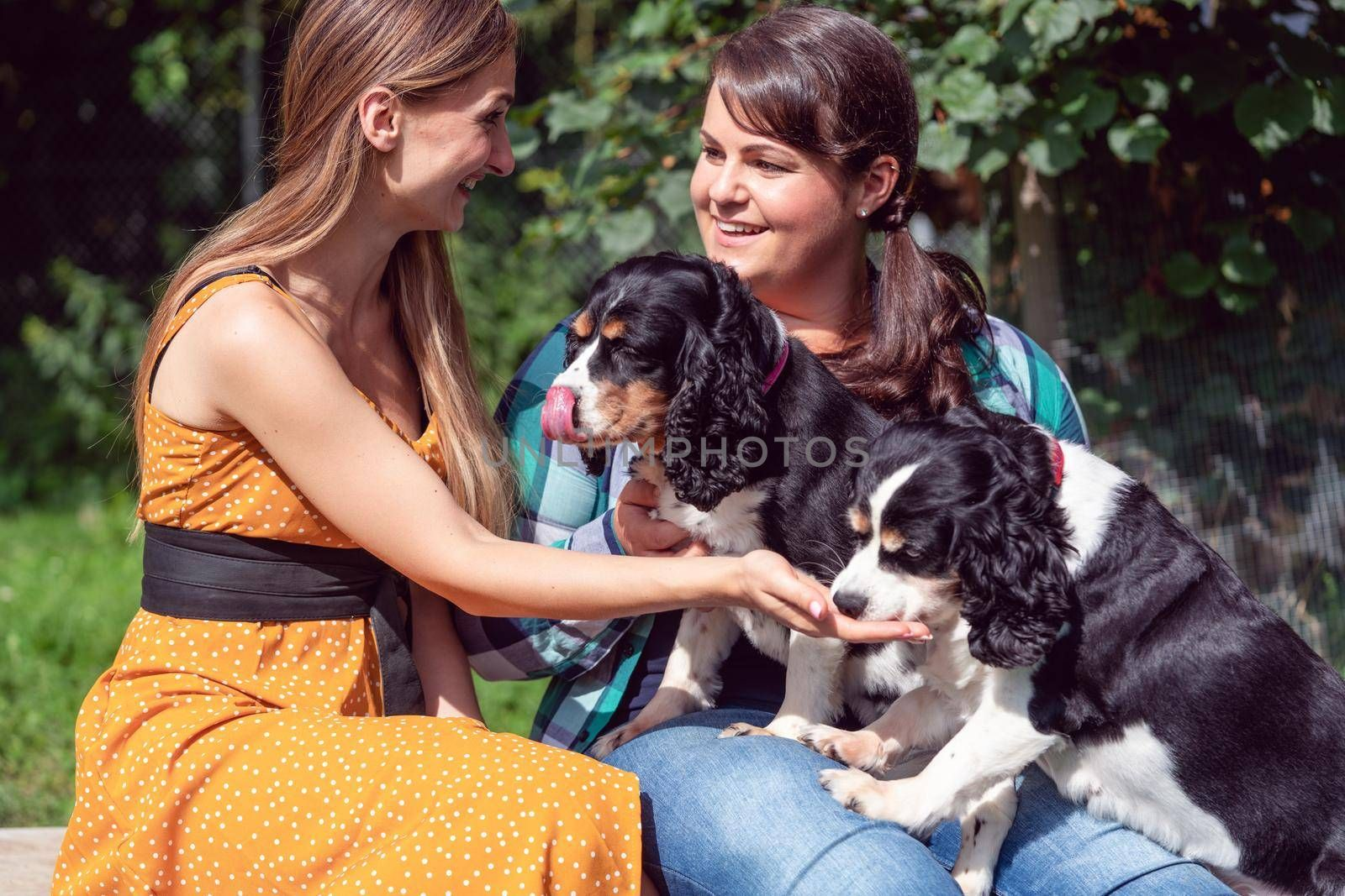 Women friends playing with dogs in the animal shelter, making friends with the pets