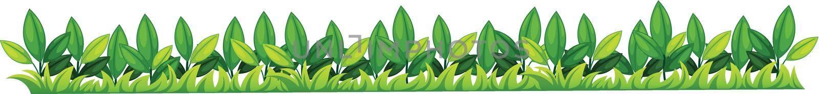 Illustration of a grass texture