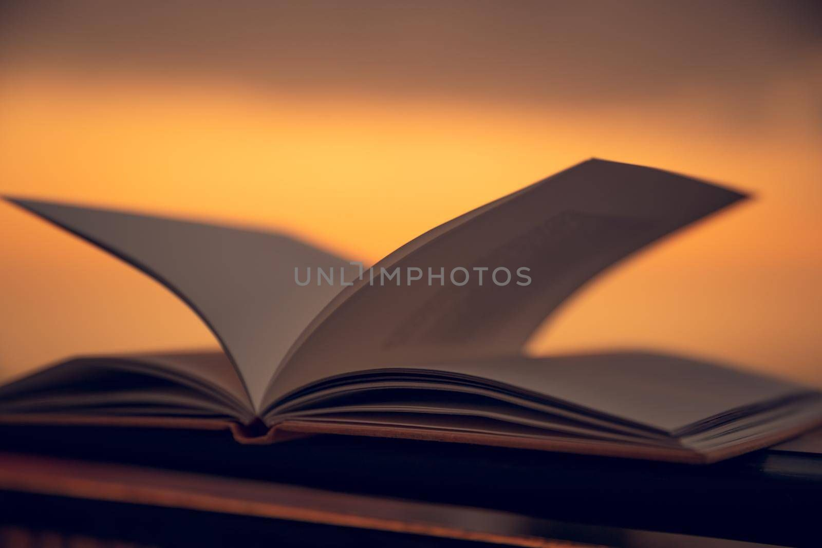 Warm Cozy Evening with an Interesting Book Outdoors. Mild Sunset Light. Calm Pleasant Pastime. Reading on Summer Holidays.