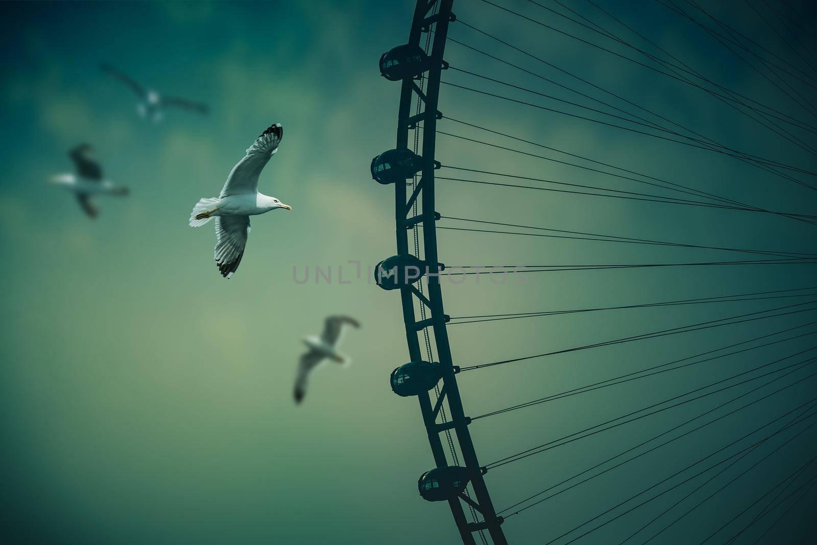 Dubai Eye with Many Beautiful Seagulls. The worlds tallest Ferris Wheel. Bluewater Island, Dubai. UAE.