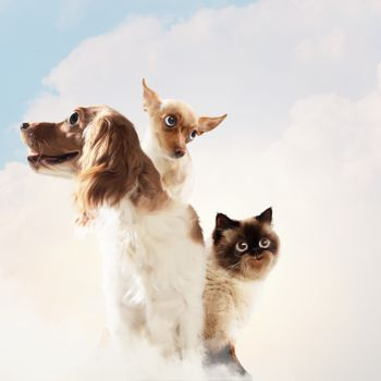 Three home pets next to each other on a light background. funny collage