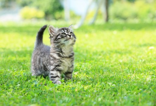 Cute little cat on the grass looking up