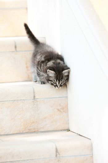 Cute little cat down the stairs outdoors