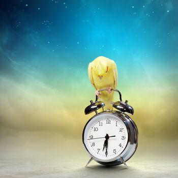 Image of yellow parrot sitting on alarm clock
