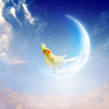 Image of yellow parrot sitting on moon