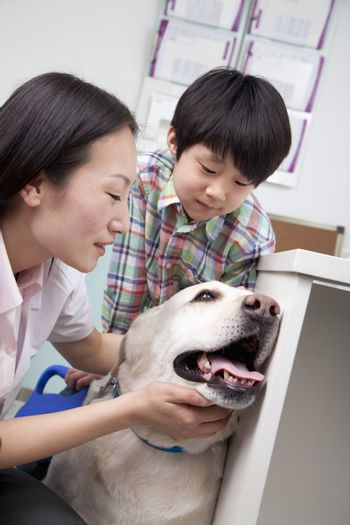 Boy with pet dog in veterinarian's office