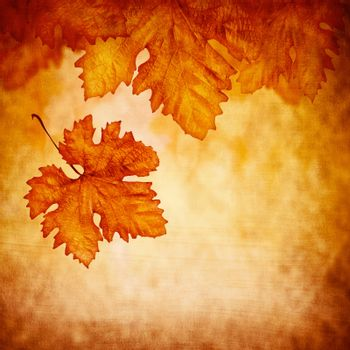 Grungy abstract autumnal background, old dry maple leaf falling down, beautiful orange foliage, autumn season, copy space, changing of nature concept