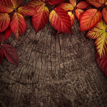 Autumn forest background. Fall red leaves on tree bark. Nature background