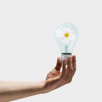 Image of human hand holding bulb with camomile inside