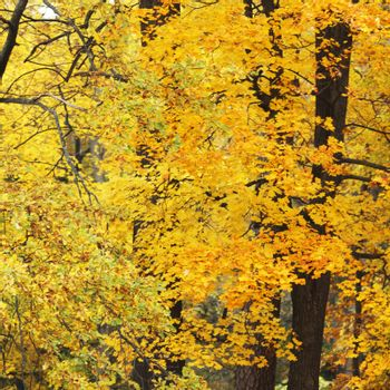 Autumn maple and oak leaves background