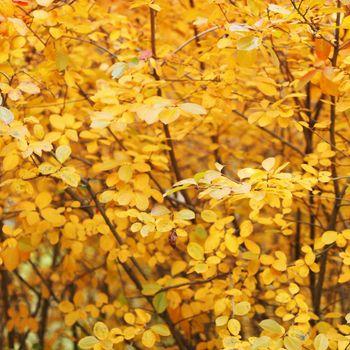 Orange autumn tree background close up
