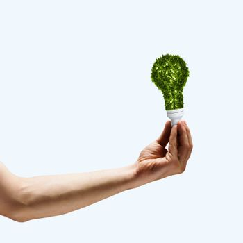 Human hand holding bulb with green tree inside
