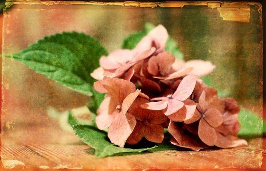 vintage bouquet with texture