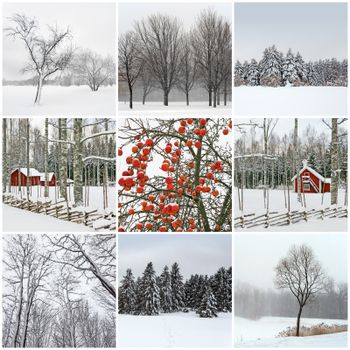 Snowy winter landscapes. Collection of 9 images.