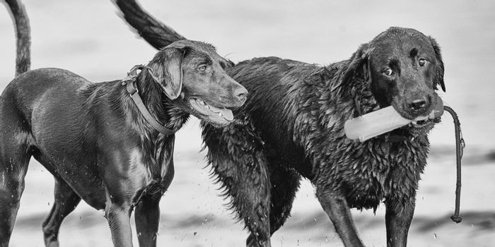 Two black dogs on the beach, San Francisco Bay, San Francisco, California, USA