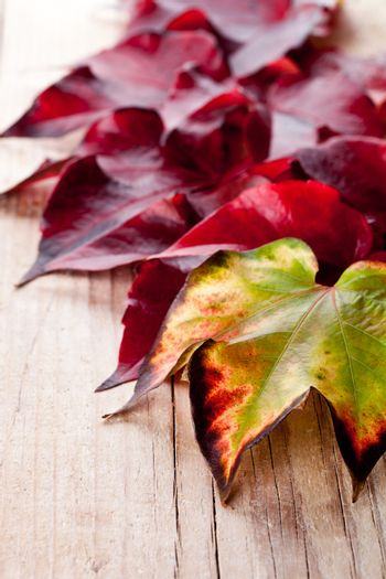 autumn leaves closeup on wooden background