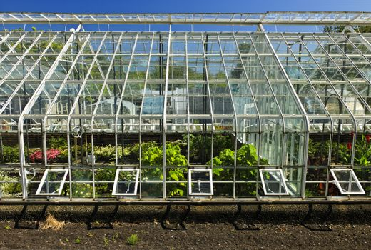 Large glass greenhouse or hothouse building exterior with plants