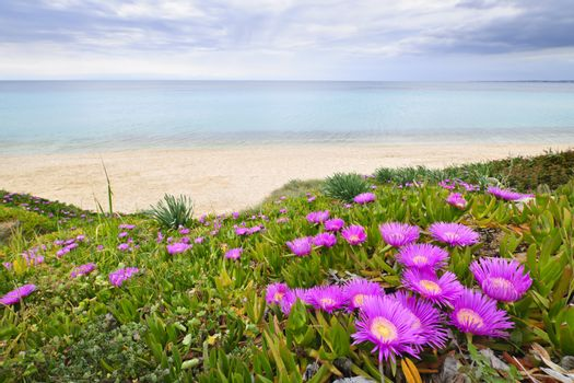 Coast of Aegean sea with blooming ice plants in Chalkidiki, Greece