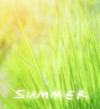 Abstract natural background, grunge photo of beautiful fresh green grass, sunny day, text space, summer season concept
