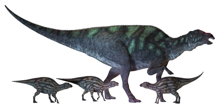 Maiasaura is a large duck-billed dinosaur that lived in North America in the Cretaceous Era shown here with several hatchlings.