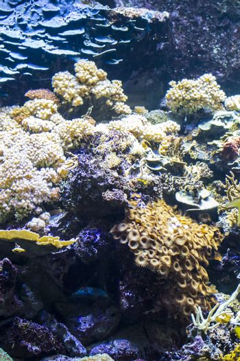 environment, seabed with fish and coral reef