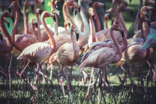 group of flamingoes with long necks and beautiful plumage