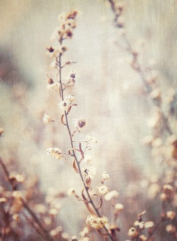 Abstract floral background, grunge style photo of beautiful flowers, fine art, faded natural wallpaper, fashioned image