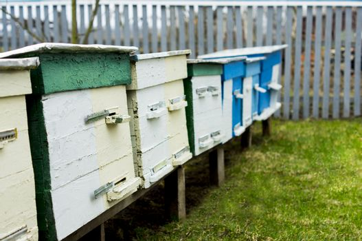 apiary. For your commercial and editorial use