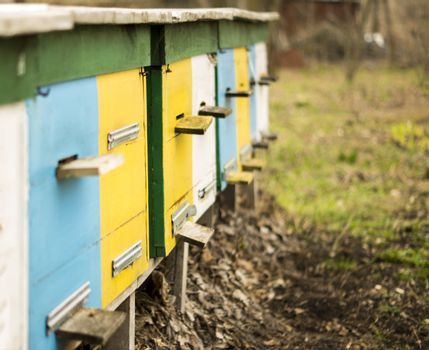 apiary . For your commercial and editorial use