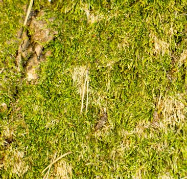 moss. For your commercial and editorial use.